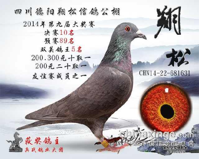 �yd�K��z�rK��h��_yd国际名鸽中心
