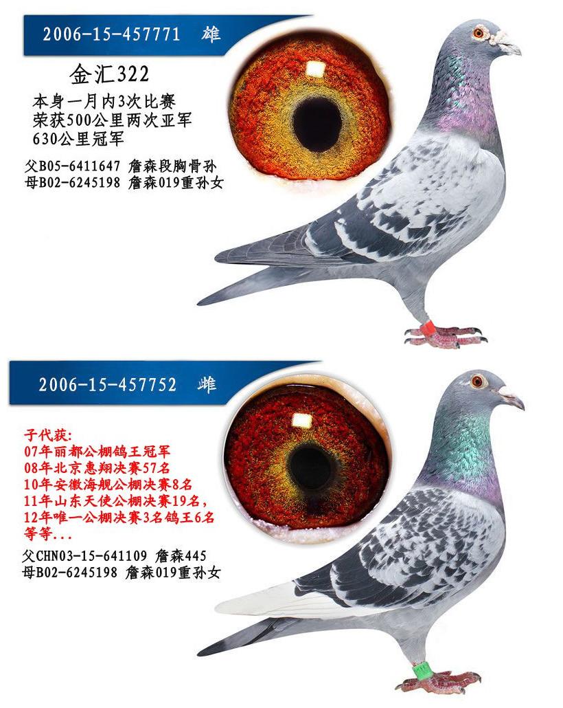 信鸽骨架结构图