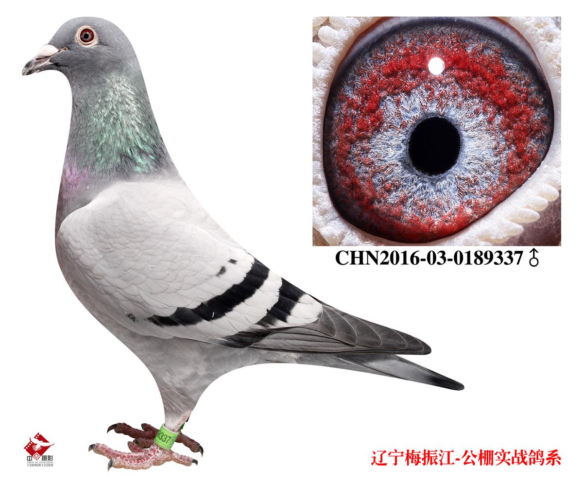 WWW_SE81_COM_辽宁梅振江 - 中信网铭鸽展厅 www.ag188.com
