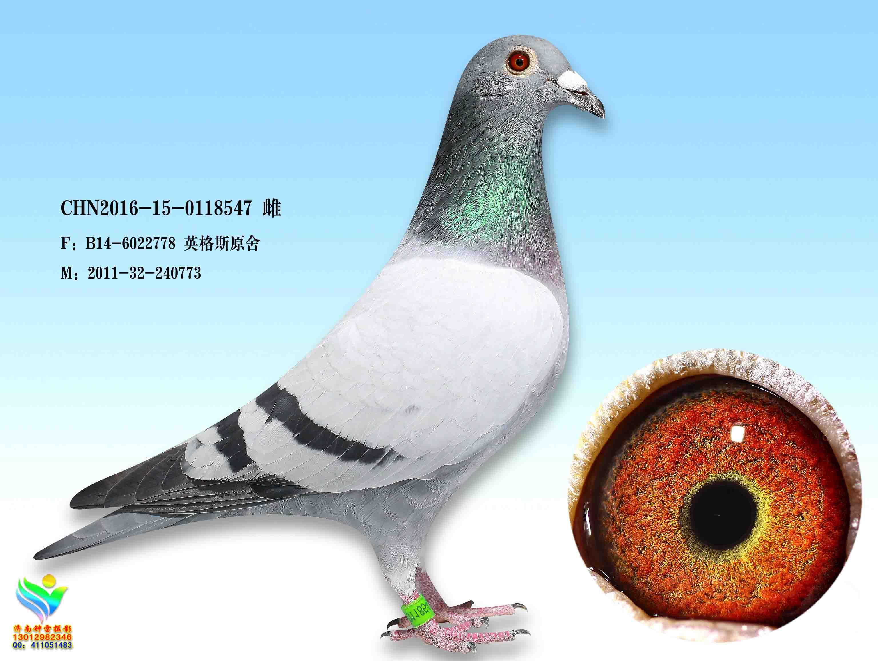 信鸽拍卖首页 拍卖专题 >> 查看拍卖商品  相关图片 商品信息 商品