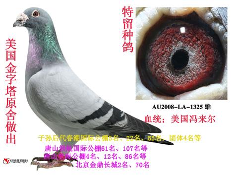 超过4羽每羽多加30元 ▲拍卖结束后,美国金字塔鸽业将拍卖爱鸽托运或