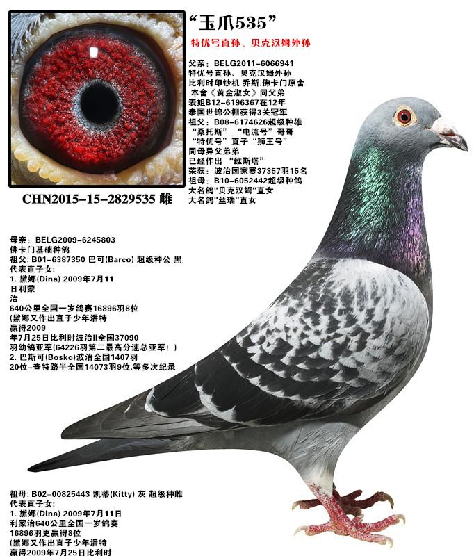 动物 鸽 鸽子 教学图示 鸟 鸟类 682_800