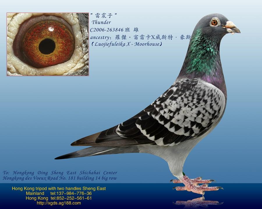 香港十二种动物账户
