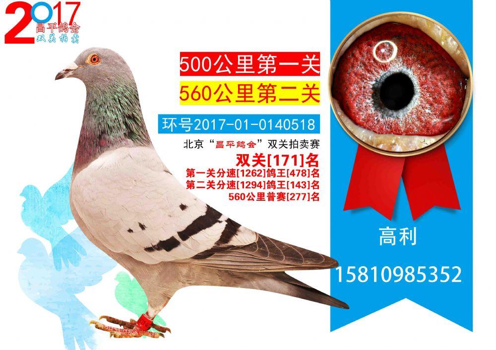 这些每一个具体的形态都取决于鸽子出生时要具备一个优良的特质.