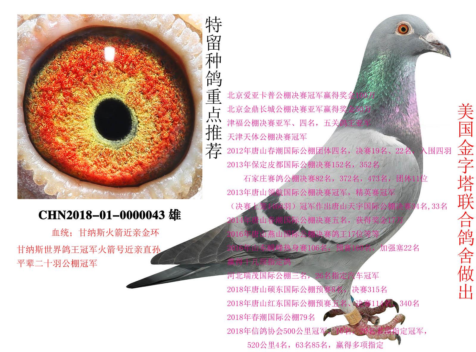 2006-詹森种鸽-00769