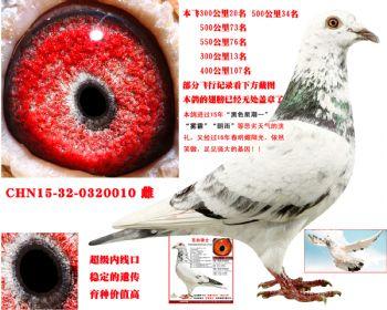 微信动物头像鸽子图片大全图片