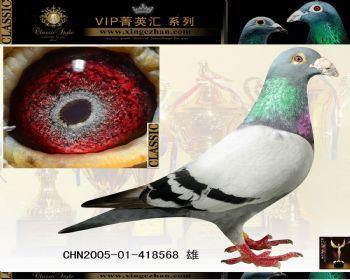 鸽子鸽天气动物图示鸟教学350_280青蛙怎么报鸟类图片