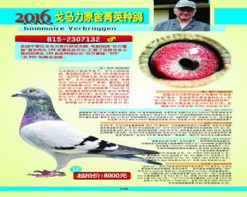 12号拍卖鸽