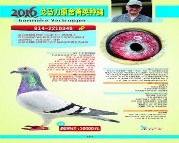 14号拍卖鸽