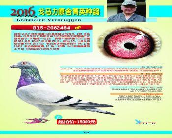 15号拍卖鸽