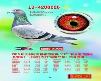 34号拍卖鸽