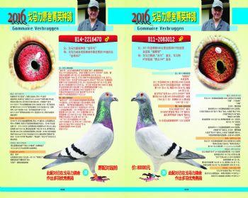 3839号拍卖鸽