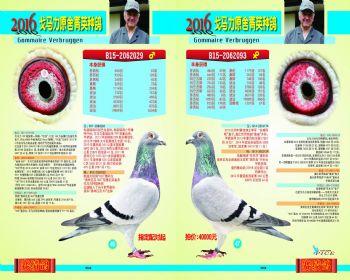 4647号拍卖鸽