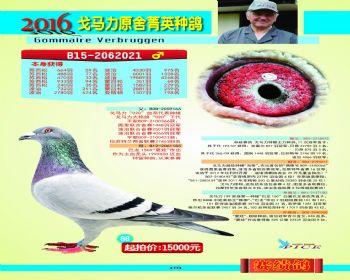 68号拍卖鸽