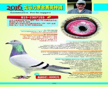 72号拍卖鸽