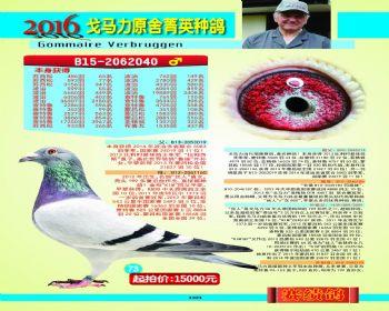 73号拍卖鸽