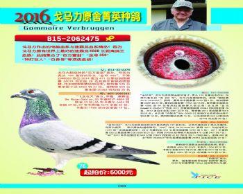 76号拍卖鸽