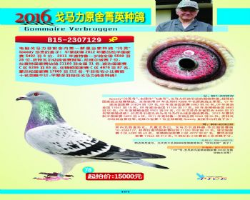 78号拍卖鸽