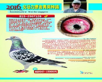 99号拍卖鸽