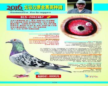 102号拍卖鸽