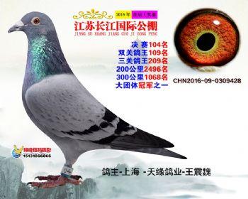 江苏长江决赛104名