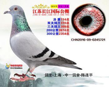 江苏长江决赛114名