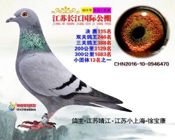 江苏长江决赛115名