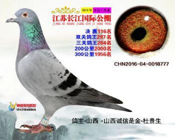 江苏长江决赛116名