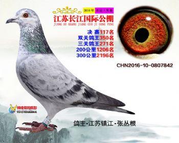 江苏长江决赛117名