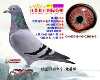 江苏长江决赛119名