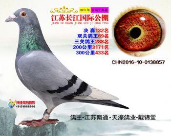 江苏长江决赛132名