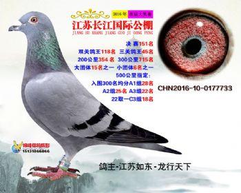 江苏长江决赛151名