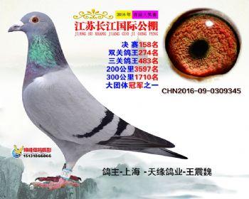 江苏长江决赛158名