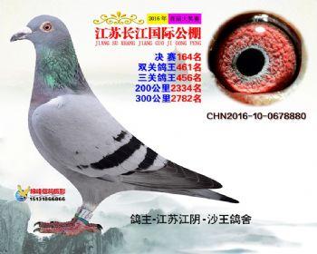 江苏长江决赛164名