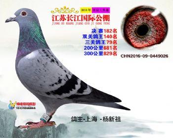 江苏长江决赛182名
