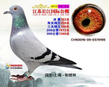 江苏长江决赛183名