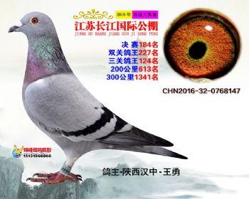 江苏长江决赛184名
