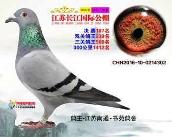 江苏长江决赛187名