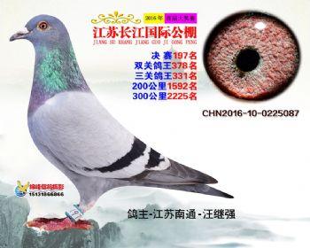 江苏长江决赛197名