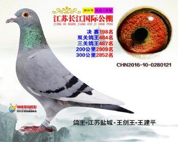 江苏长江决赛198名