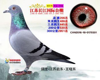 江苏长江决赛206名