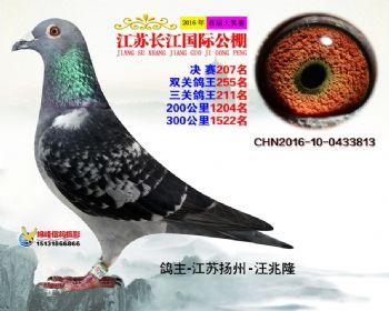 江苏长江决赛207名