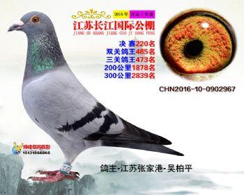 江苏长江决赛220名