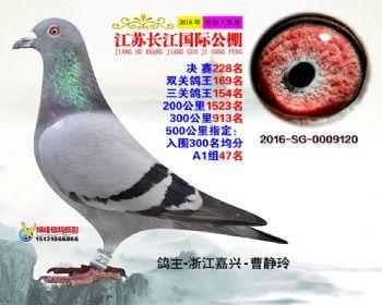 江苏长江决赛228名