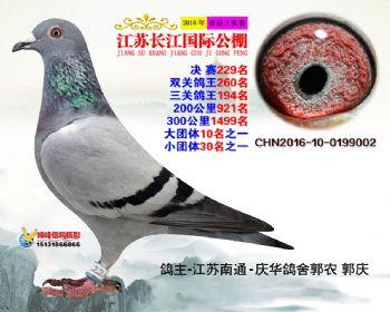 江苏长江决赛229名