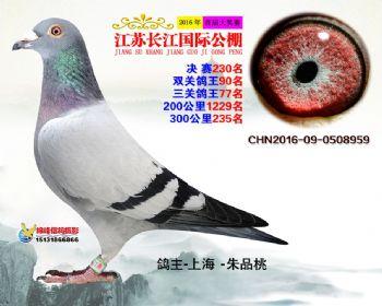 江苏长江决赛230名