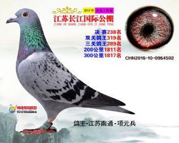 江苏长江决赛238名