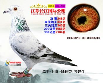 江苏长江决赛248名
