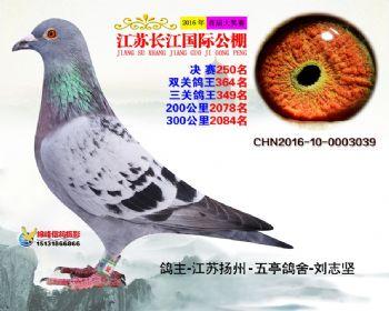 江苏长江决赛250名
