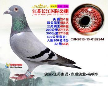 江苏长江决赛251名